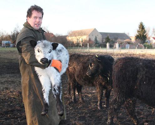 Löwenbruch Galloway Zucht Frank Mertens und Kalb