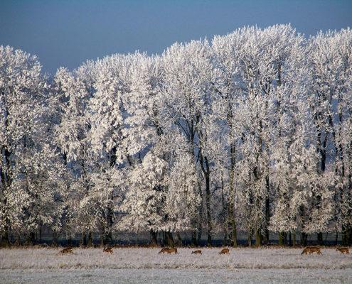 Winteridylle in Löwenbruch - Rehe am Waldesrand